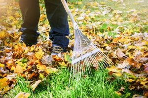 Landscape-Maintenance-Service-lexington-ky